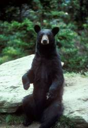Bear hunt 2